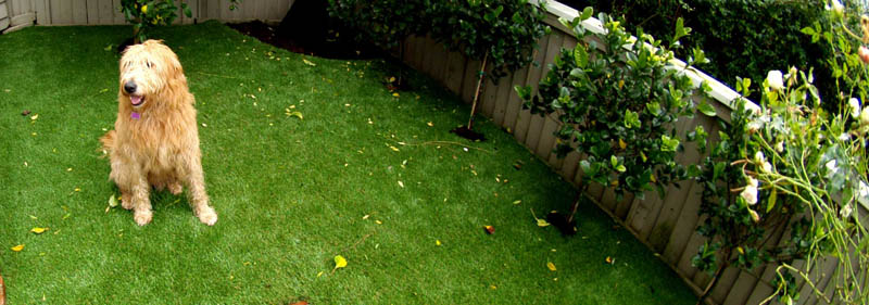 Synthetic Grass-designrulz (12)