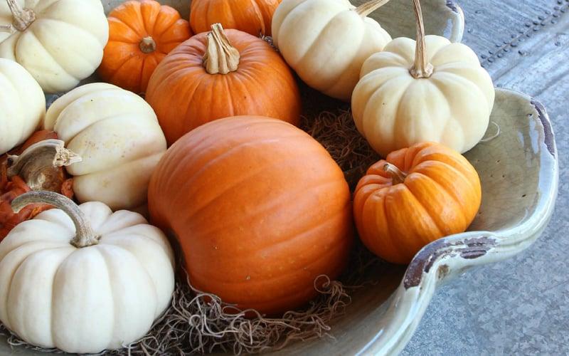 30 charming white pumpkin fall decorations for a festive for Fall pumpkin decorating ideas