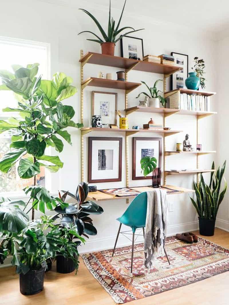 indoor palnts ideas designrulz (4)
