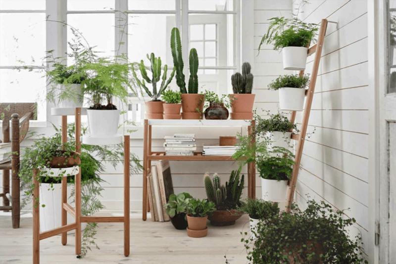 indoor plants- designrulz (1)