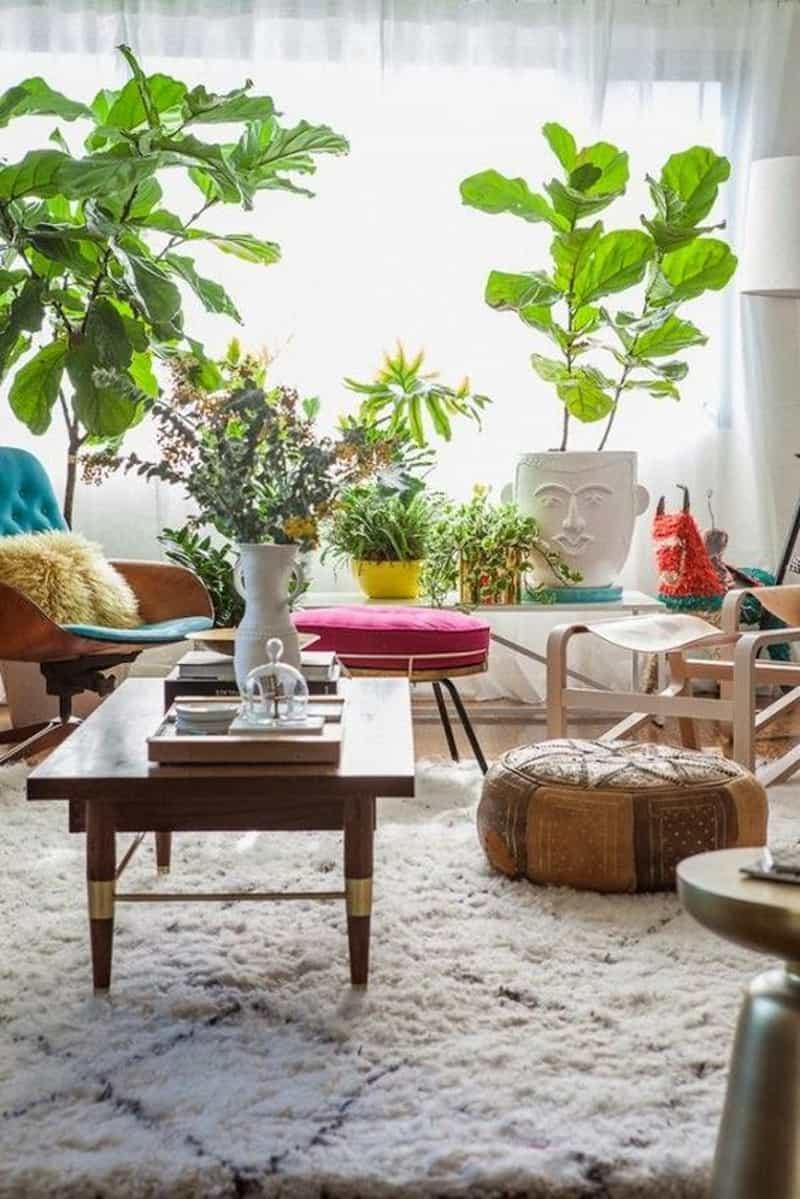 indoor plants- designrulz (11)