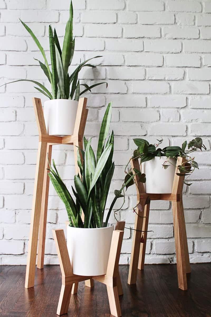 indoor plants- designrulz (13)