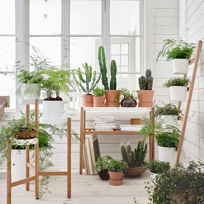 indoor plants- designrulz (17)