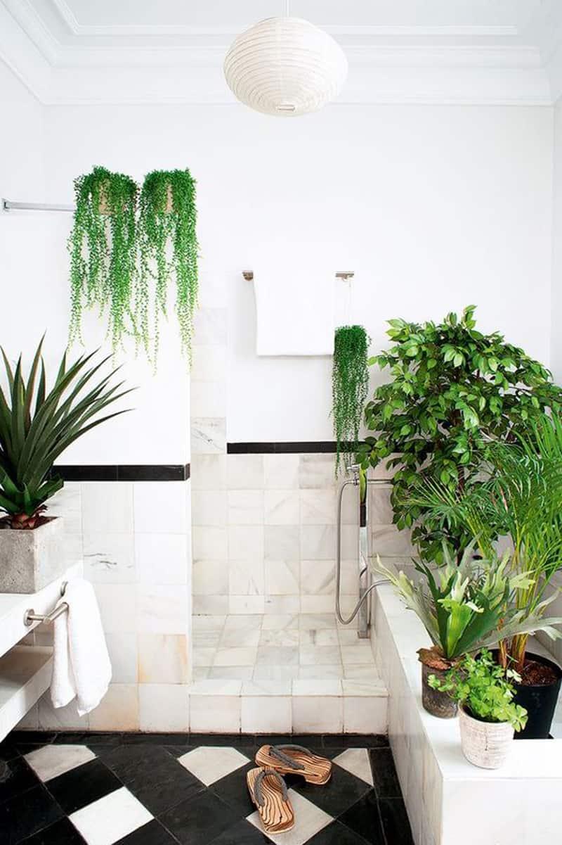 indoor plants- designrulz (18)