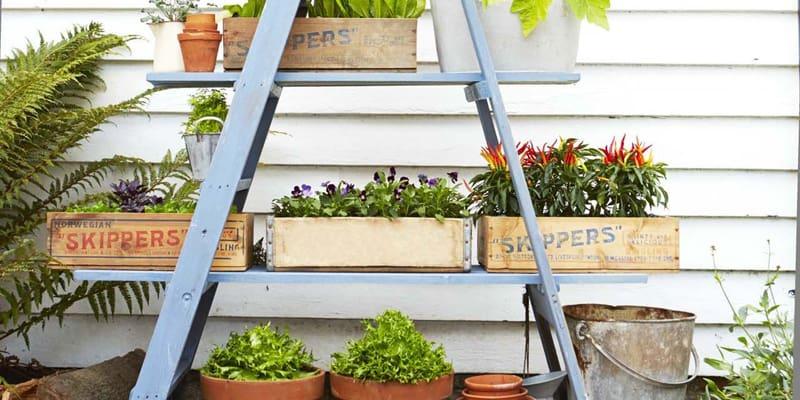 indoor plants- designrulz (27)