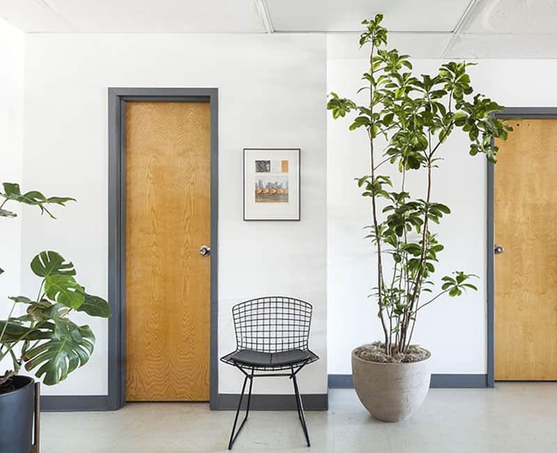 indoor plants- designrulz (30)