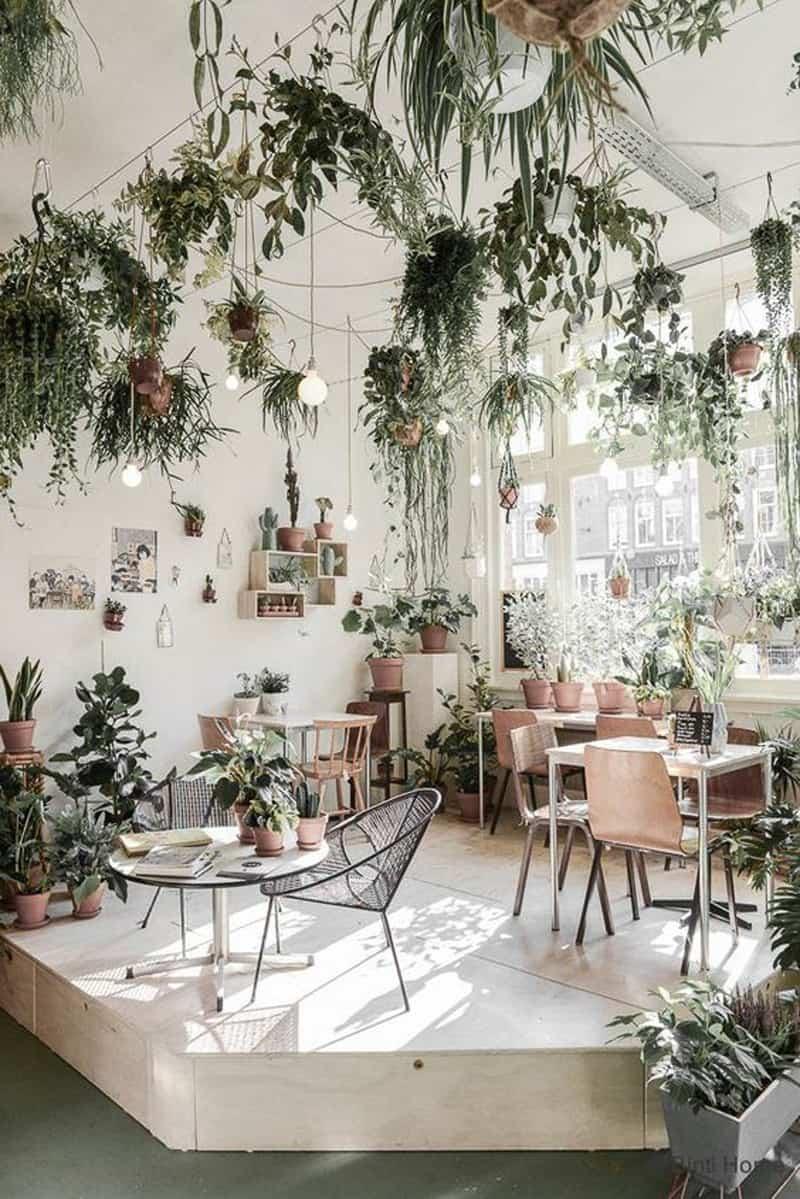 indoor plants- designrulz (6)