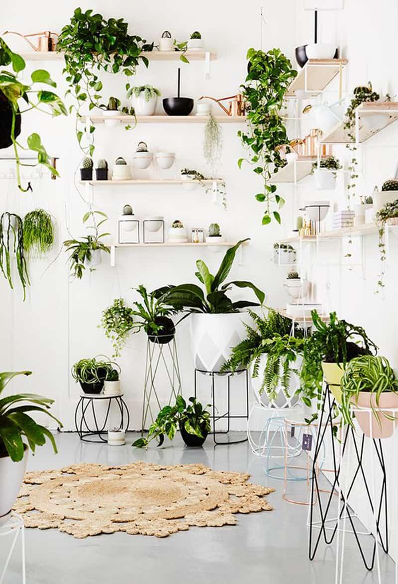 indoor plants- designrulz (9)
