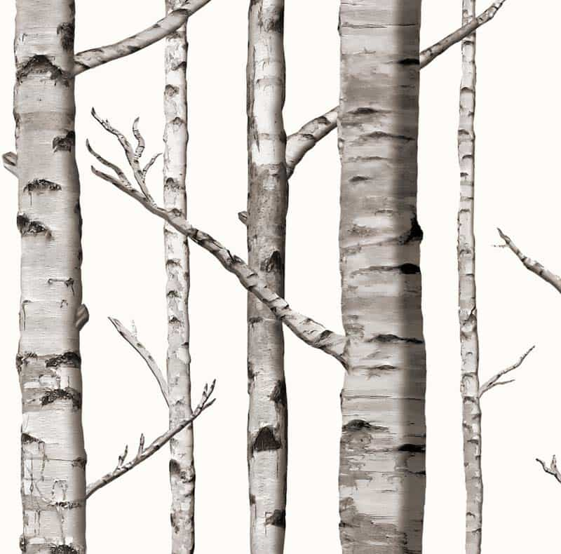Fresh Birch Trees Wallpapers Add a Natural Touch To Your Home YU53