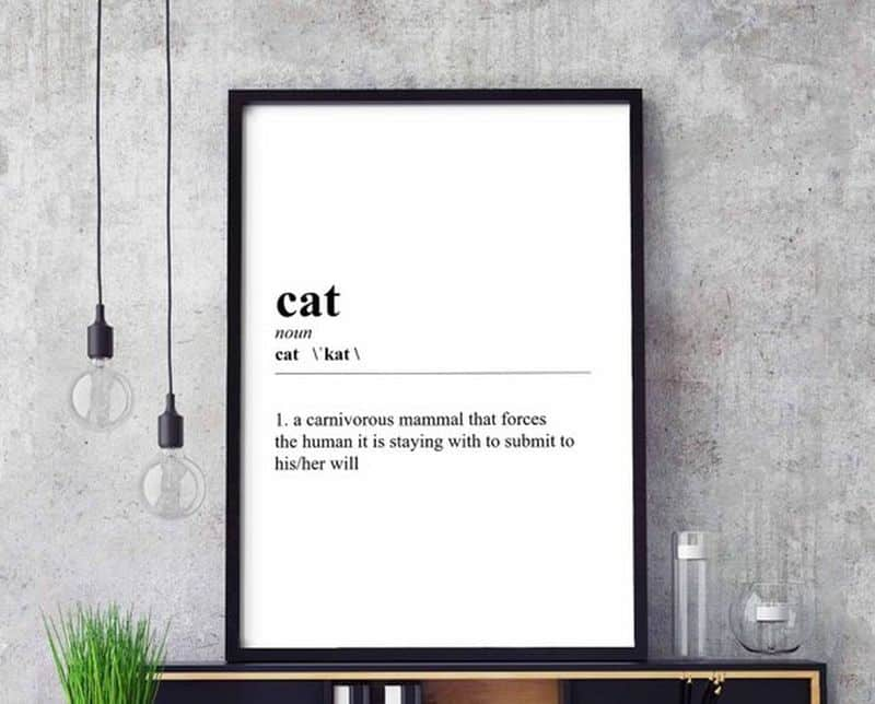 funny cat posters