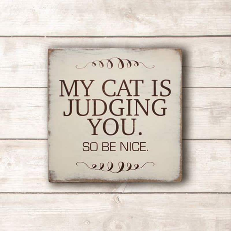 cat poster quotes