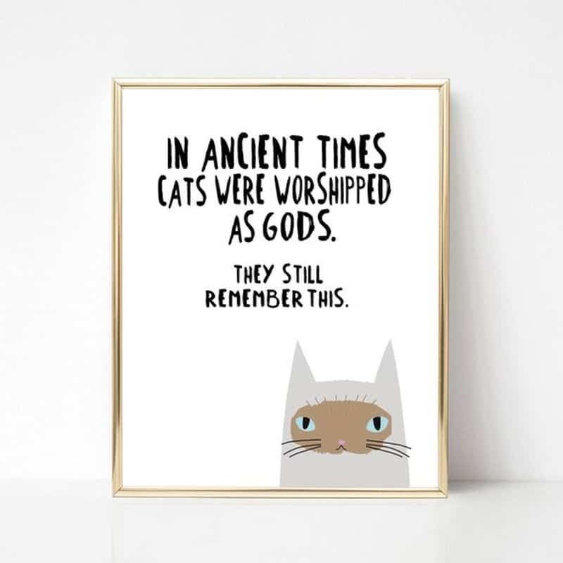 funny cat wall art