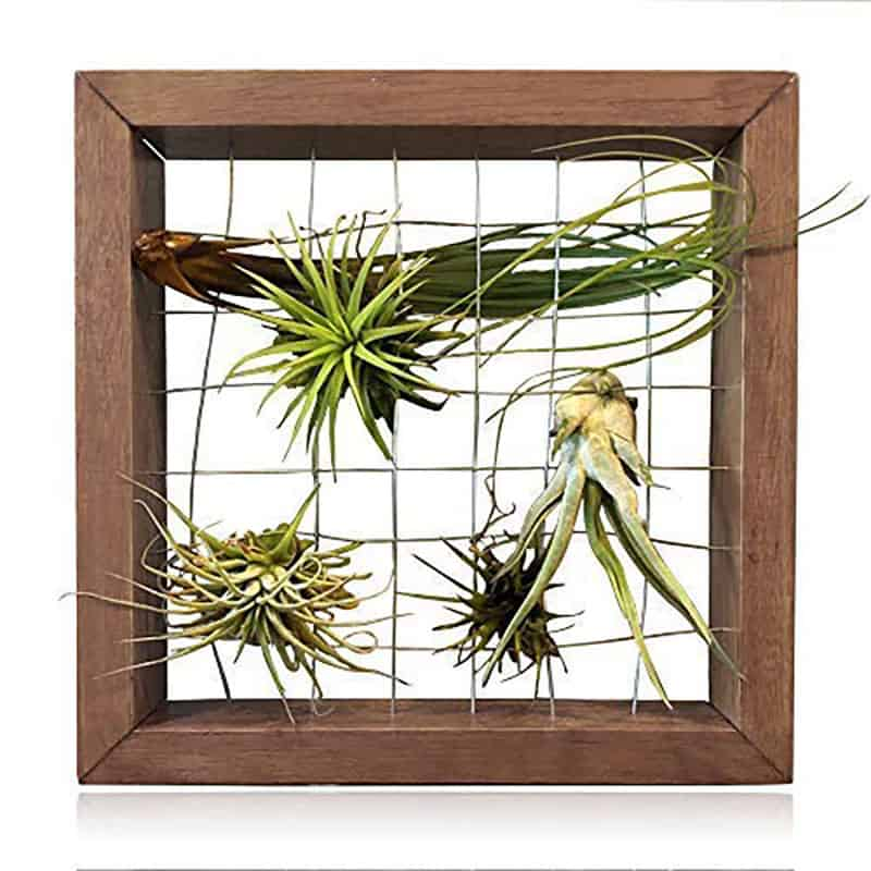 How To Use Hanging Air Plants Instead Of Boring Deco Things
