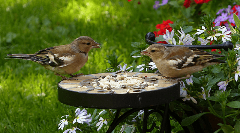 How to Attract More Songbirds to Your Garden